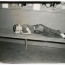 Boy sleeping on aboard &quot;Elizabeth Monroe Smith&quot; steamship. Image provided by Historical Society of Pennsylvania