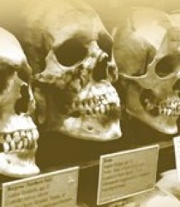 Hyrtle Skull Collection in Museum